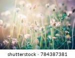 grass flowers under the sun... | Shutterstock . vector #784387381