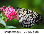 closeup butterfly on flower | Shutterstock . vector #784395181