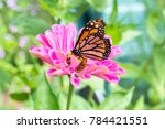 Stock photo a monarch butterfly on a purple flower 784421551