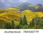 the longsheng rice terraces... | Shutterstock . vector #784430779