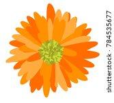 gerbera daisy isolated. vector... | Shutterstock .eps vector #784535677