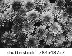a black and white shot of a... | Shutterstock . vector #784548757