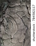 curvilinear fissures on bark of ... | Shutterstock . vector #784582117