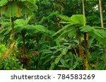 rainforest  far north... | Shutterstock . vector #784583269