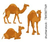 Three Different Poses Camels...