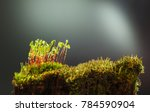 Closeup Of Old Mossy Stump Wit...