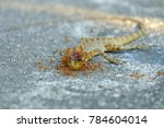 chameleon died on the cement... | Shutterstock . vector #784604014