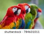 close up group of ara parrots ...   Shutterstock . vector #784631011