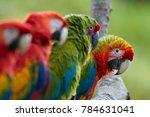 curious parrot  staring... | Shutterstock . vector #784631041