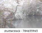 grey heron  ardea cinerea  at...   Shutterstock . vector #784655965