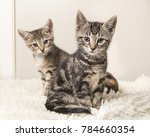 Two Cute Tabby Baby Cats...