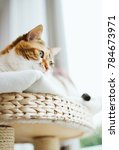 beautiful cat pet feline... | Shutterstock . vector #784673971