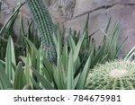 cactus variety of plants | Shutterstock . vector #784675981