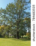 a large old oak in a park in... | Shutterstock . vector #784683535