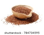 sorgo seed  sorghum moench  | Shutterstock . vector #784734595