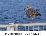 One Legged Seagull By Ocean