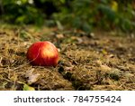 Apple On The Ground