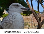 Seagull Watching The Rome....