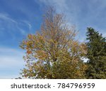 trees for clean air and blue sky | Shutterstock . vector #784796959