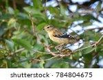 birdwatching  birding  bird... | Shutterstock . vector #784804675