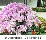 modern orchid garden design | Shutterstock . vector #784848451