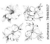 flower drawing sketch.... | Shutterstock . vector #784865017