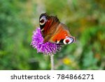 european common peacock... | Shutterstock . vector #784866271