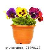 Beautiful Violet Flower In Pot...