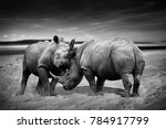 two rhinoceros fighting head to ... | Shutterstock . vector #784917799