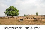 panorama of the site one of the ... | Shutterstock . vector #785004964