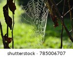 drops of water on the spider's... | Shutterstock . vector #785006707