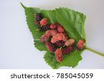 mulberry and leaves on white... | Shutterstock . vector #785045059