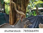 A Big Deer In The Zoo