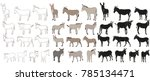 vector isolated donkey  mule ... | Shutterstock .eps vector #785134471