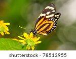 Beautiful Tiger Mimic Butterfl...