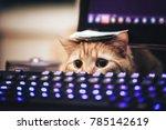 ginger cat near the computer... | Shutterstock . vector #785142619
