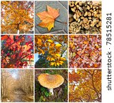 autumn collage showing... | Shutterstock . vector #78515281