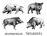 graphical set of wild hogs... | Shutterstock .eps vector #785182051