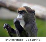 De Brazza's Monkey ...