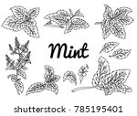 mint  drawing set. isolated... | Shutterstock . vector #785195401