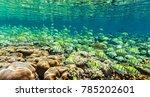 Big School Of Fish Inthe India...