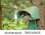 the feeding chicks in a nest... | Shutterstock . vector #785210425