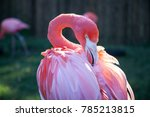 Small photo of Flamingo preen closeup