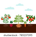 garden beds with root... | Shutterstock .eps vector #785237395