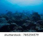 schools of fish on the reef | Shutterstock . vector #785254579