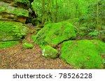 lush rainforest in the budawang ... | Shutterstock . vector #78526228