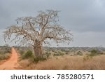 Small photo of Angolan forest landscape