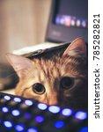 Stock photo ginger cat near the computer keyboard closeup 785282821