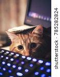 Stock photo ginger cat near the computer keyboard closeup 785282824