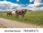Small Hearth Of Cows Surrounde...